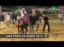 Concentración de Burros en Una Pará en Gines 2014