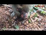 Funny Video , Amazing Monkey Videos , Monkey Life Funny Monkey 2017 _ Aloha Kh Channel