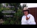 Ржавчина на растениях Симптомы возбудители и лечение