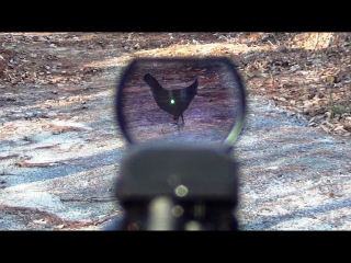 Aim Sports Red Dot on the Ruger 22/45 Lite
