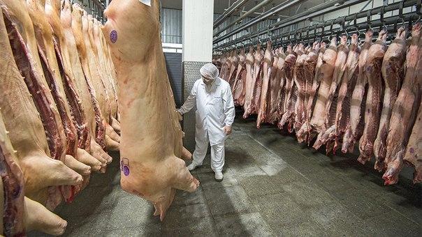 Россия начнет поставлять свинину в Китай до конца года Россия планиру