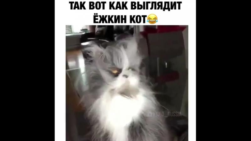 А вы знали как выглядит ёшкин кот
