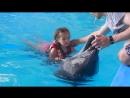 Дельфин и русалка.