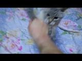 Кошке 11 лет. Ловит Бабайку