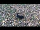 Клепина прогулка в Московском дворике
