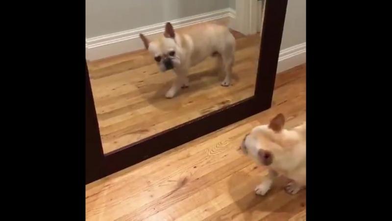 Когда с утра увидел себя в зеркале