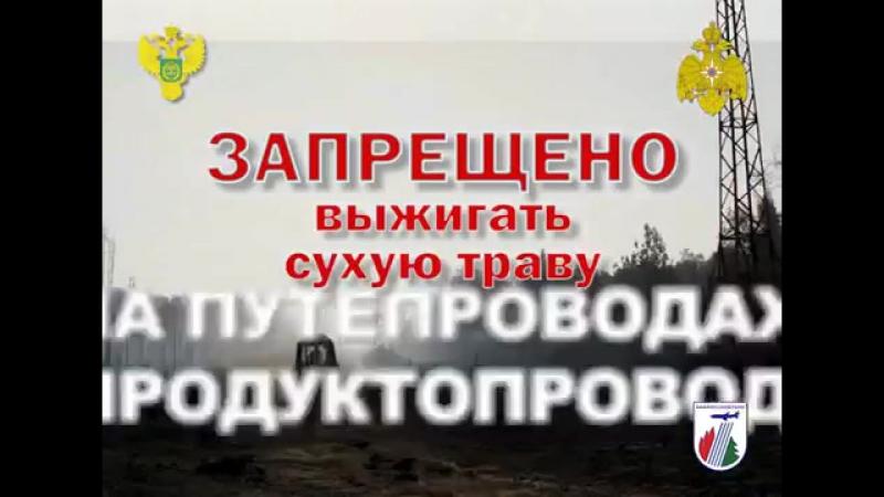Береги лес ТК ОКСИОН