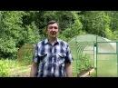 Сотовый поликарбонат ГРИНХАУС-НАНО часть 3, уход за томатами в теплице в первой ...