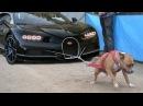 Chuyện lạ về giống khuyển có sức mạnh và sự khôn ngoan phi thường kỷ huấn luyện chó dog amazing