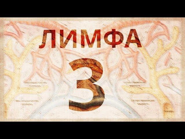 Гидpa 3. Лимфа