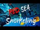Сноркелинг в Красном море. Подводный мир Египта | The underwater world of Egypt, snorkeling...