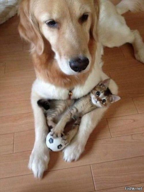 Собака и котёнок с мячиком