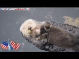 Ласкавая выдра мама обнимает своего детеныша Дикая природа США Милое и смешное видео Америка