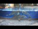 дельфины засмотрелись на белок в океанариуме