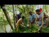 В дебрях Латинской Америки. Пантанал. Сердце дикой природы Бразилии 2012