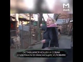 В ростовском приюте для бездомных кошек и собак нашли сотни трупов животных. Вместо лечения хвостатых просто убивали и складывал