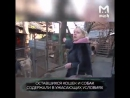 В ростовском приюте для бездомных кошек и собак нашли сотни трупов животных Вместо лечения хвостатых просто убивали и складывал