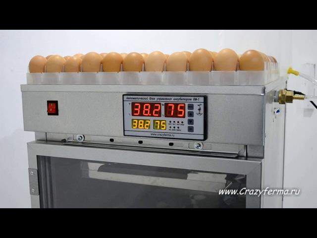 Инкубатор автоматический АИ-264 от CrazyFerma