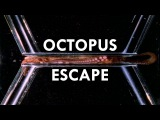 Octopuses are the Worlds Greatest Escape Artists (Ft. PhilosophyTube)