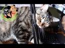 Чем мы кормим своего кота Сэмыча Видео для подписчиков