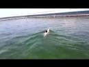 Девочка плавает с дельфином