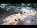 жырные гнездовые собаки
