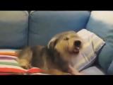 Как чихают разные животные (VHS Video)