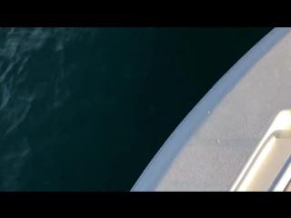 Во Флориде рыбаки сняли на видео акулу, высоко выпрыгивающую из воды