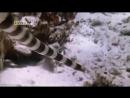 Самые опасные животные Юго Восточная Азия Познавательный природа 2007