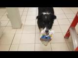 Умная собакой зашла в магазин за покупками