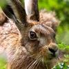 Дом зайца. Группа владельцев диких зайцев
