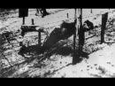 Как погиб Яков Джугашвили, старший сын Сталина
