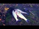 Ловля жереха Небольшая вечерняя рыбалка Рыбалка на велосипеде