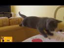 Funny Cats Compilation HD Котики смешные подборка