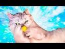 Котик симка Magic Cats НОВЫЕ ПРИКОЛЫ 2017 Смешные кошки приколы про кошек и котов 2017