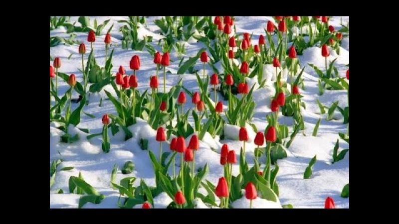 Лучшее для души! Пробуждение весны...ПопулярноенаЮТУБе