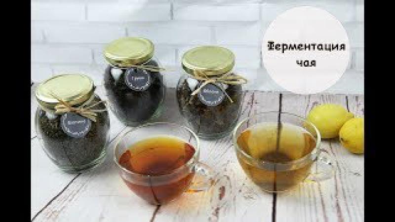 Чай из листьев яблони, груши и малины. Ферментация чая