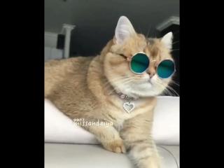 """Крутой и стильный кот """"rockstar"""" -post malone"""