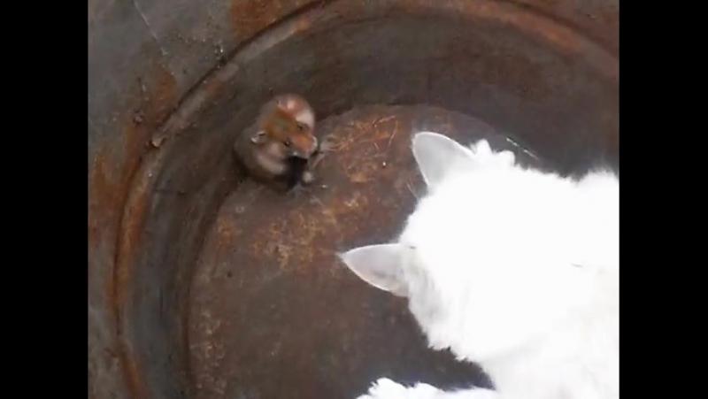 кот vs хомяк Том тышқаннан өліп таяқ жегеннен кейін... 😜😁🤣😂😂😂😂