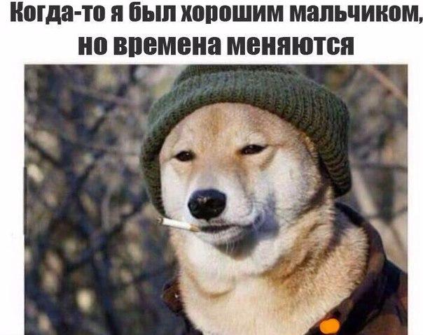 Фото №456267126 со страницы Михаила Кравцова