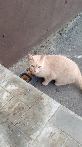 У 26 дома бегает кот или кошка, очень красивая,видно что домашняя,може