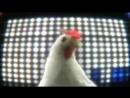 Chiken SONG!!!!!!!!!😅😅😅😅😅😅😘😍