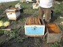 когда можно ставить вощину в семью пчел - весна на пасеке