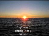 Frightened Rabbit - Yes I Would