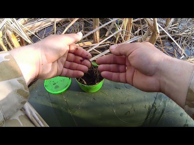 Как правильно насадить навозного червя на крючок летней мормышки