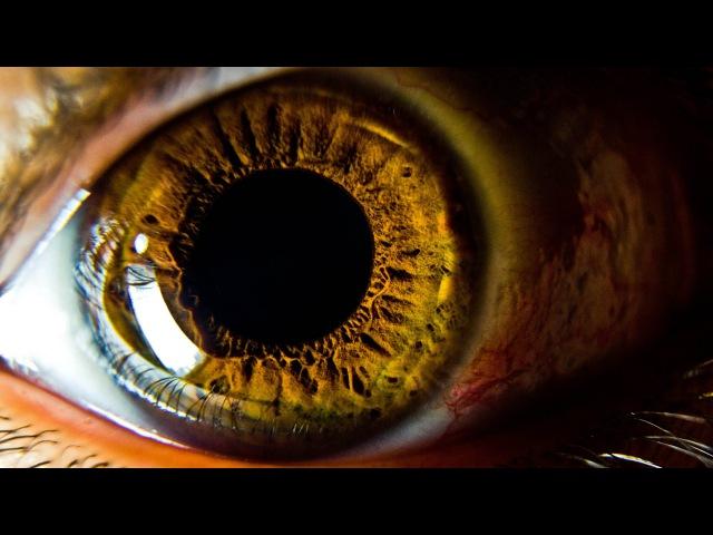 Интересные факты о нашем теле - Глаза и Зрение. bynthtcyst afrns j yfitv ntkt - ukfpf b phtybt.