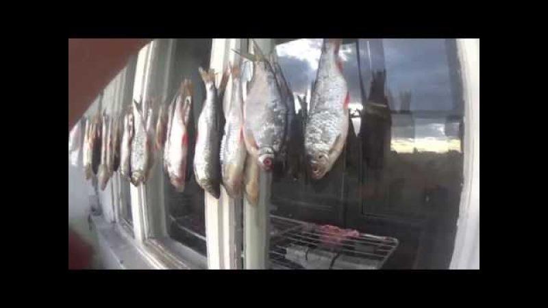 Как засолить рыбу- плотву, леща, бустеру. (ОТЛИЧНЫЙ РЕЦЕПТ)
