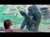 Try Not To Laugh or Grin Watching Funny Kids vs Animals Vines Compilation - Funny Kids Fails Videos