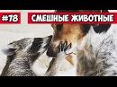 Смешные животные - собака и енот Bazuzu Video ТОП подборка 78 декабрь 2017