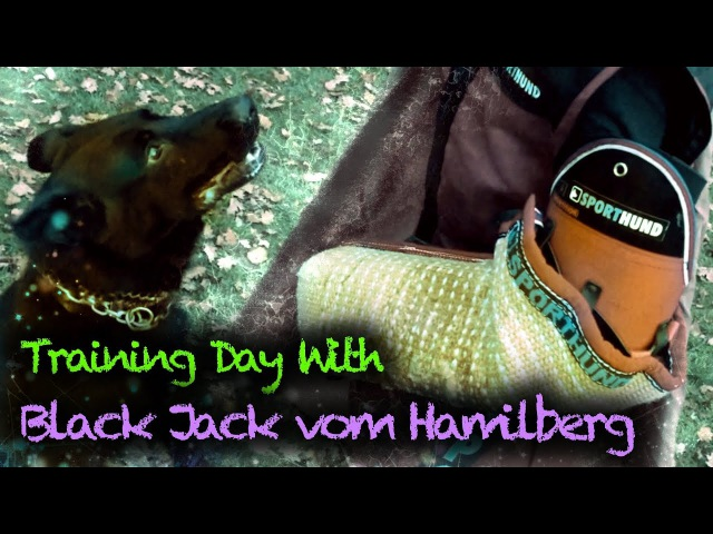 IPO Schutzhund Training Day With Black Jack vom Hamilberg